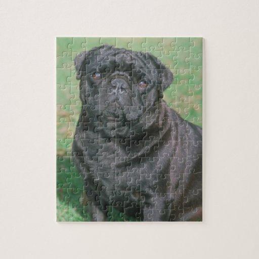 Black Chinese Pug Dog Puzzle