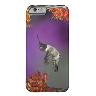 Black-chinned Humingbird, Archilochus alexandri, Barely There iPhone 6 Case