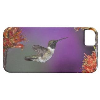 Black-chinned Humingbird, Archilochus alexandri, iPhone 5 Covers