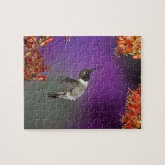 Black-chinned Humingbird, Archilochus alexandri, Puzzle