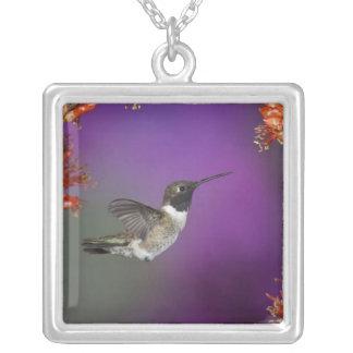 Black-chinned Humingbird, Archilochus alexandri, Square Pendant Necklace