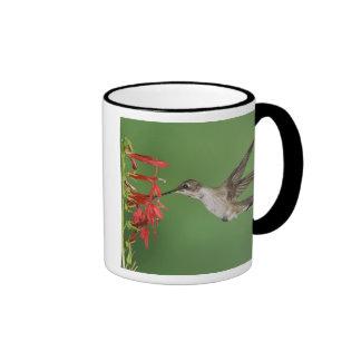 Black-chinned Hummingbird, Archilochus 2 Ringer Coffee Mug