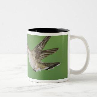 Black-chinned Hummingbird, Archilochus 2 Two-Tone Coffee Mug