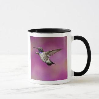 Black-chinned Hummingbird, Archilochus Mug