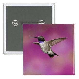 Black-chinned Hummingbird, Archilochus Pinback Button