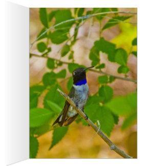 Black chinned hummingbird card