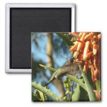 Black-Chinned Hummingbird in Flight Magnet