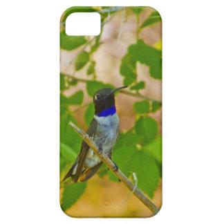 Black chinned hummingbird iPhone SE/5/5s case
