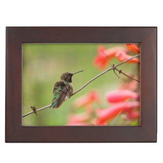 Black-Chinned Hummingbird Memory Box