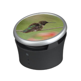 Black-Chinned Hummingbird Speaker
