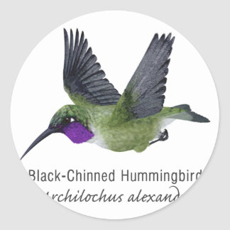 Black Chinned Hummingbird with Name Classic Round Sticker