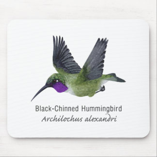 Black Chinned Hummingbird with Name Mousepad