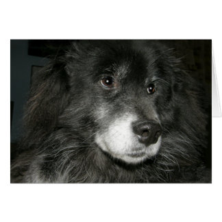 Black Chow Chow Mix Photo Cards