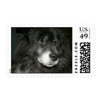 Black Chow Chow Mix Photo Stamp