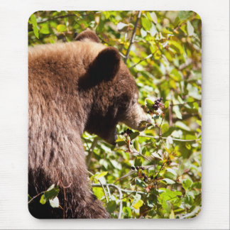 Black Cinnamon Bear Mouse Pad