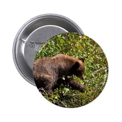 Black Cinnamon Bear Pin