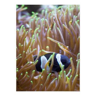 Black Clown Fish Card