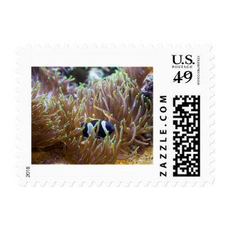 Black Clown Fish Stamps