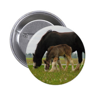 Black Clydesdale and Filly Button