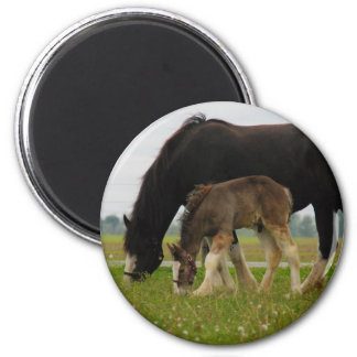 Black Clydesdale and Filly Fridge Magnet