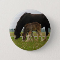 Black Clydesdale and Filly Pinback Button