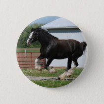 Black Clydesdale Pinback Button