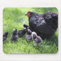 Black Cochin Chicken with Chicks Mousepad