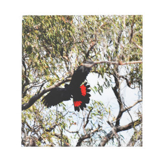 BLACK COCKATOO IN FLIGHT QUEENSLAND  AUSTRALIA NOTEPAD