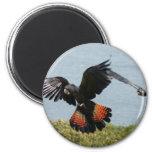 Black Cockatoo in for landing Fridge Magnet