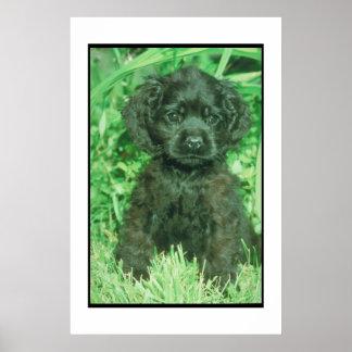 Black Cocker Spaniel Puppy Poster