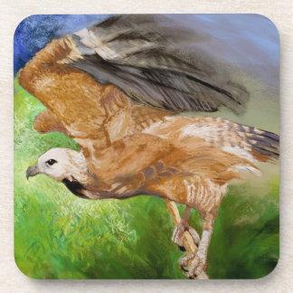 Black-collared Hawk Pastel Painting Coasters