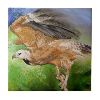 Black-collared Hawk Pastel Painting Tile