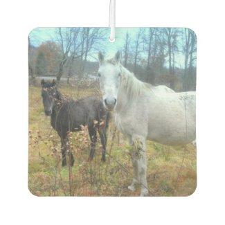 Black Colt White Horse