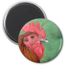 Black Copper Maran Rooster Magnet