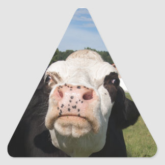 black cow attacking you triangle sticker