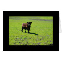 Black Cow Greeting Card and Note Card