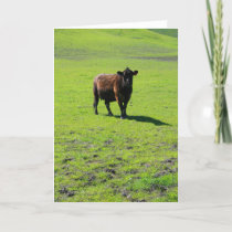 Black Cow Greeting Card,Note Card