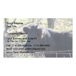 Black Cow Looking Out Of Fence Business Card Template