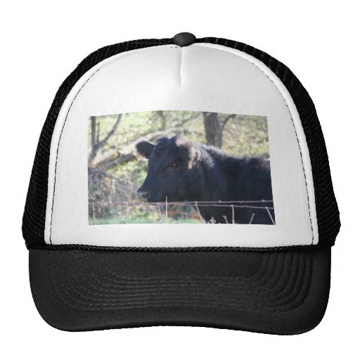 Black Cow Looking Out Of Fence Mesh Hats