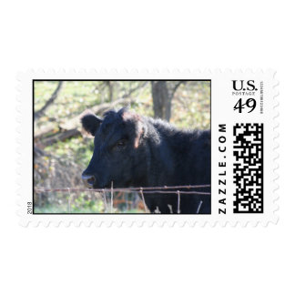 Black Cow Looking Out Of Fence Stamp