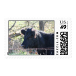 Black Cow Looking Out Of Fence Postage Stamps