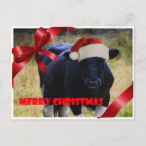 Black Cow Merry Christmas Postcard