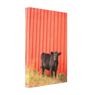 Black Cow Red Barn Stretched Canvas Print