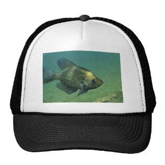 Black crappie hat