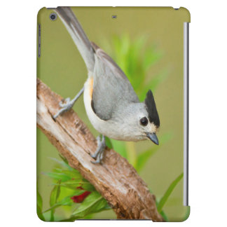Black-Crested Titmouse Cover For iPad Air
