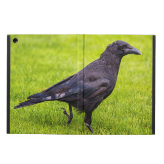 Black crow cover for iPad air