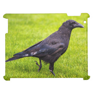 Black crow iPad cases