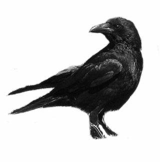 Black Crow photo sculpture