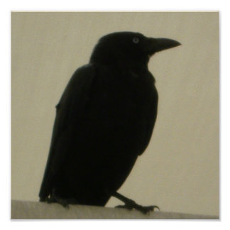 Black Crow Poster