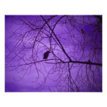 Black Crow Purple Sky Poster